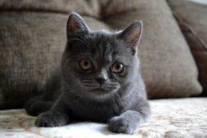Reizwortgeschichte Katze