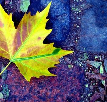 Poem learn autumn